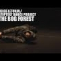 bog_forest_wolz2
